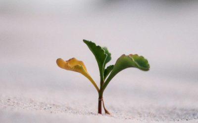 Do not Despise small beginnings